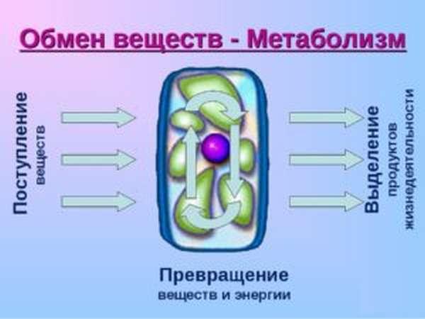 Метаболизм