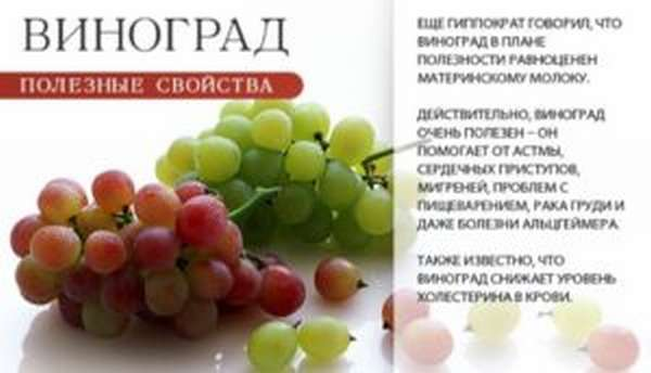 Характеристики ягоды