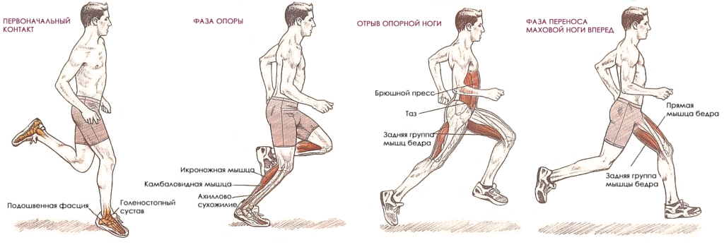 Нагрузки мышц при беге трусцой