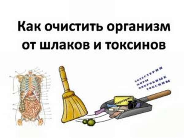 Как очистить организм от шлаков и токсинов