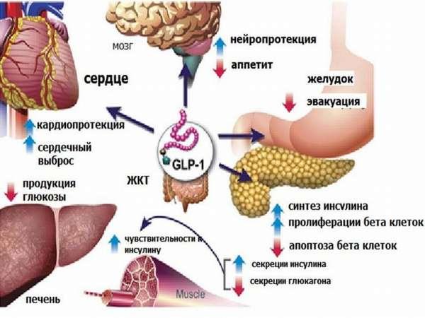 Лираглутид для похудения