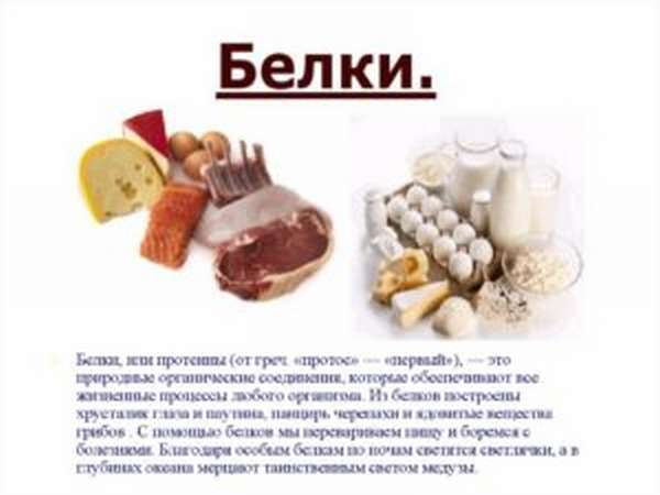 Белки в питании