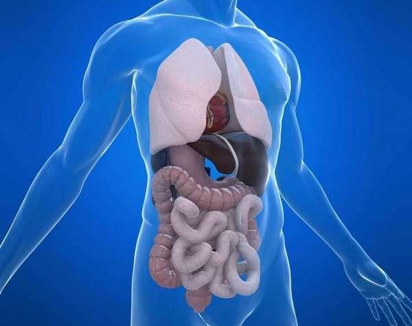 Аппаратное исследование внутренних органов