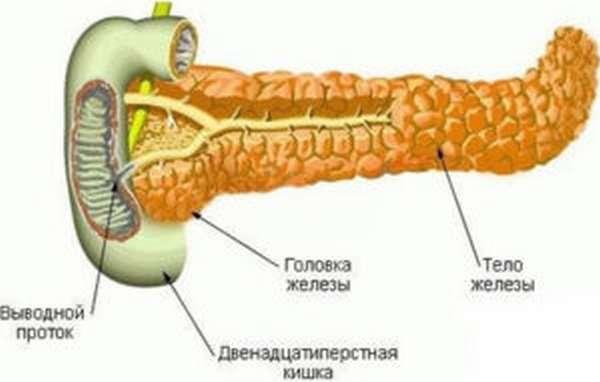 Патологий поджелудочной железы
