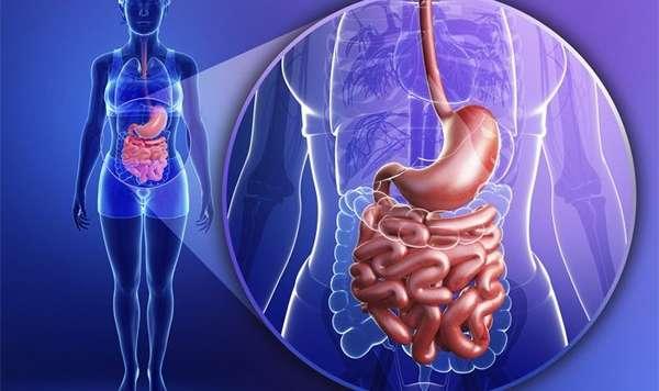 Поддержание органов желудочно-кишечного тракта