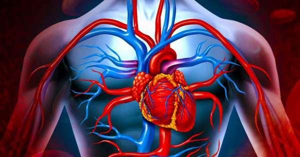 Нарушения в работе сердечной мышцы и сосудистой системы