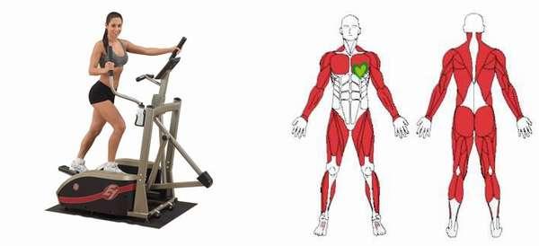 Когда какие мышцы напрягаются
