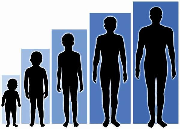 Рост и вес подростков