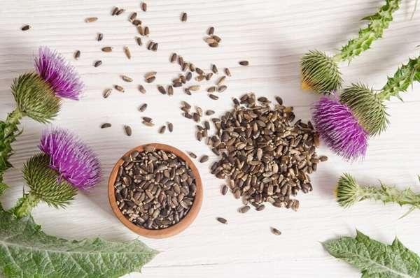 Семена расторопши для похудения