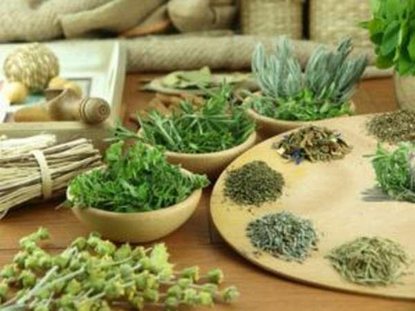 Особенности трав для похудения
