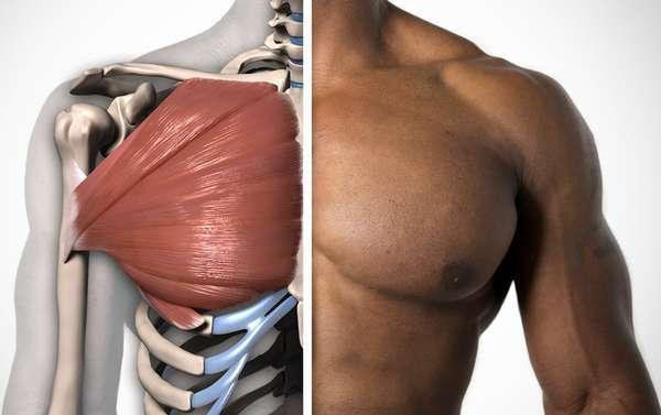 Укрепить мышцы грудной клетки