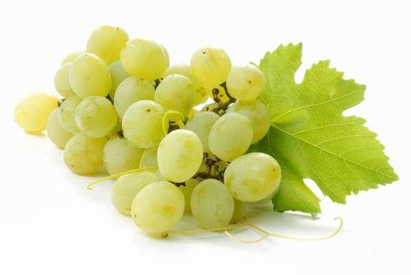 Сорт белого винограда