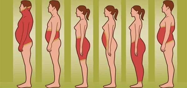 распределения жировых