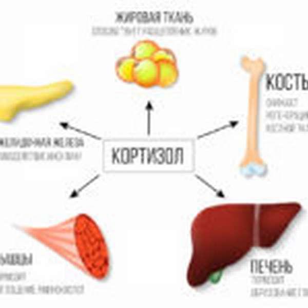 Чем и как устранять гормональное ожирение живота?