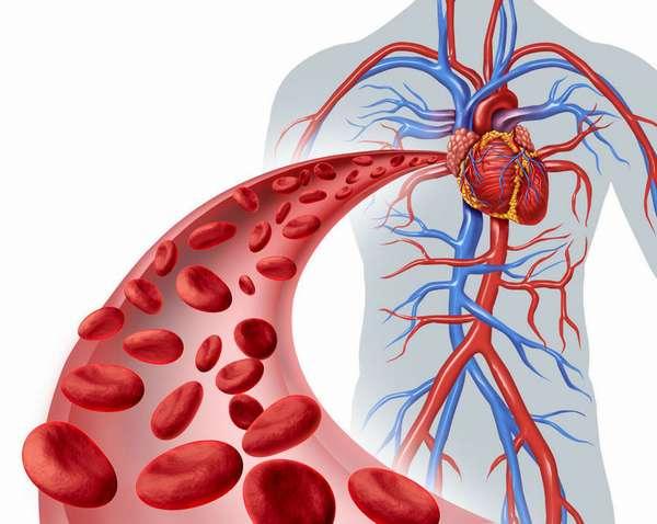 Нормализирует кровообращение