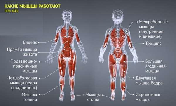 Нагрузка на мышцы при беге
