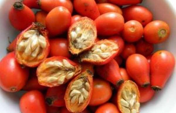 семена шиповника