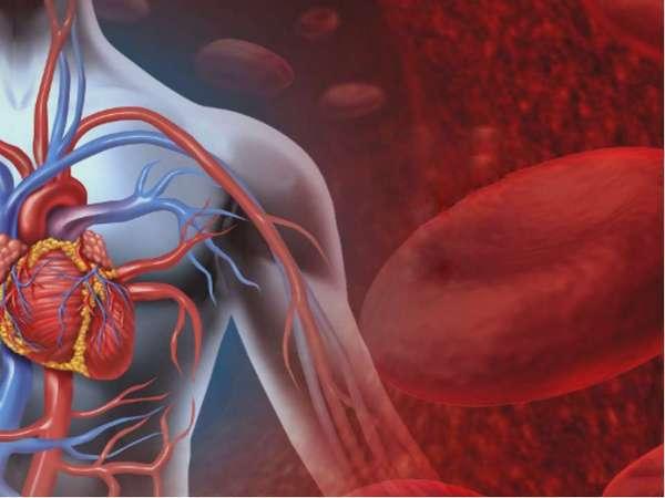 Нарушениям работоспособности кровеносной системы